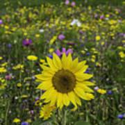 Sunflower And Wildflowers Art Print
