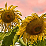 Sunflower Art 1 Art Print