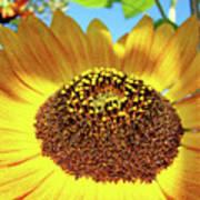 Sunflower Art Prints Orange Yellow Floral Garden Baslee Troutman Art Print