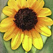 Sunflower Expressed Art Print