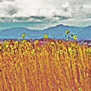 Sunflower Field 1 Art Print