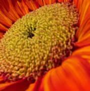 Sunflower Fire 1 Art Print