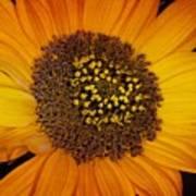 Sunflower Glory Art Print