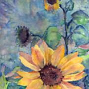 Sunflower In Bloom Art Print