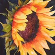Sunflower Print by Karen Stark