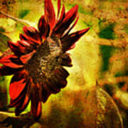 Sunflower Art Print by Lois Bryan