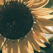 Sunflower Matte Art Print