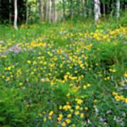 Sunflower Meadow Art Print