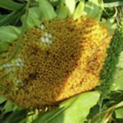 sunflower No.2 Art Print