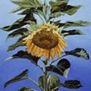 Sunflower Nodding Art Print