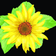 Sunflower On Black Background Art Print