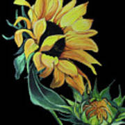 Sunflower  On Black Art Print
