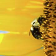 Sunflower Pollen Art Print