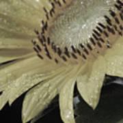 Sunflower Rain Art Print