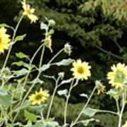 Sunflower Sea Of Happiness Art Print