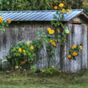 Sunflower Shed Art Print