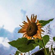 Sunflower Sky Art Print