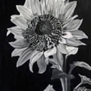 Sunflower Sutra Art Print