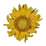 Sunflower T Art Print