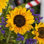 Sunflower Triplets Art Print