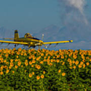 Sunflowers And Crop Duster Art Print