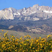 2a6742-sunflowers And Mount Humphreys  Art Print