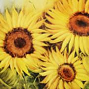 Sunflowers Art Print by Fatima Stamato