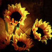 Sunflowers In Shadow Art Print
