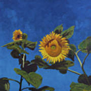 Sunflowers Art Print by Marco Busoni