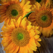 Sunflowers On White Boards Art Print