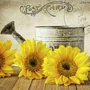 Sunflowers Postcard Art Print
