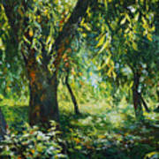 Sunlight Into The Willow Trees Art Print
