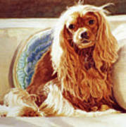 Sunlight On Cavalier King Charles Art Print