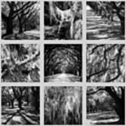 Sunlight Through Live Oaks Collage Art Print