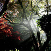 Sunlight Through The Tree In Misty Morning 1. Art Print