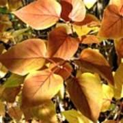 Sunlit Lilac Leaves Art Print