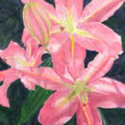 Sunlit Lilies Art Print
