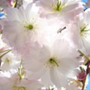 Sunlit Pink Blossoms Art Print Spring Tree Blossom Baslee Art Print
