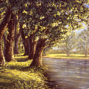 Sunlit Riverbank Art Print