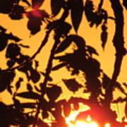Sunlit Shadows Art Print