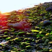 Sunlit Stones Art Print