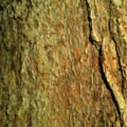 Sunlit Tree Bark Art Print