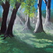 Sunlit Woods Art Print