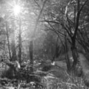 Sunlit Woods, West Dipton Burn Art Print