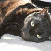 Sunning Black Cat Art Print