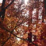 Sunny Autumn Day Poster Art Print