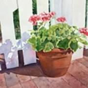 Sunny Day Geraniums Print by Bobbi Price