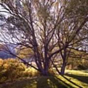 Sunny Mono Tree Art Print