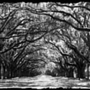 Sunny Southern Day - Black And White With Black Border Art Print