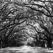 Sunny Southern Day - Black And White Art Print